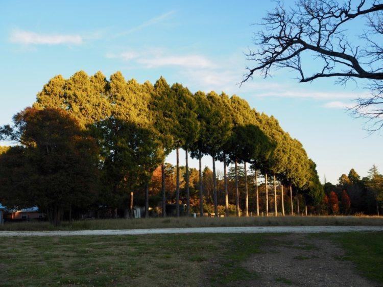 My Rural Retreat Guyra trees, image Amanda Woods